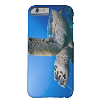 Cayman Islands, Little Cayman Island, Underwater Barely There iPhone 6 Case