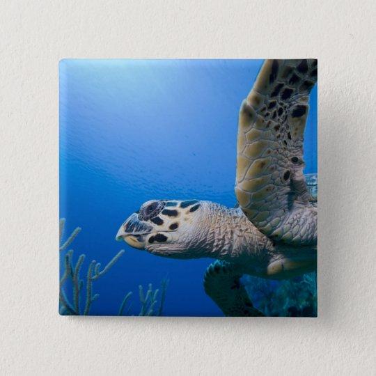 Cayman Islands, Little Cayman Island, Underwater Button