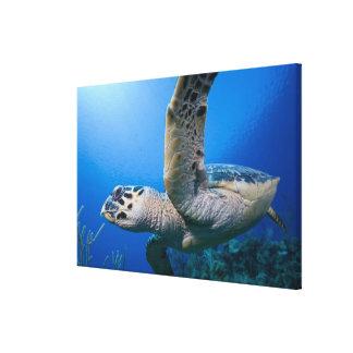 Cayman Islands, Little Cayman Island, Underwater Canvas Print