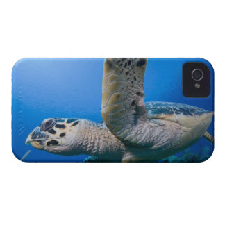Cayman Islands, Little Cayman Island, Underwater Blackberry Bold Case