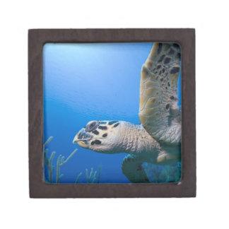Cayman Islands, Little Cayman Island, Underwater Gift Box