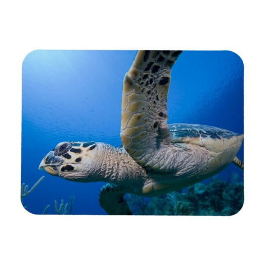 Cayman Islands, Little Cayman Island, Underwater Magnet