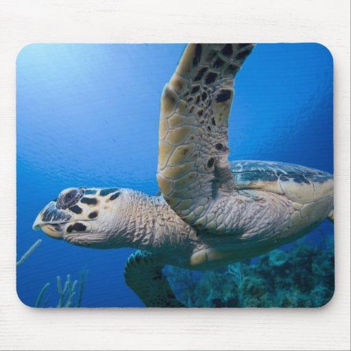 Cayman Islands, Little Cayman Island, Underwater Mouse Pads