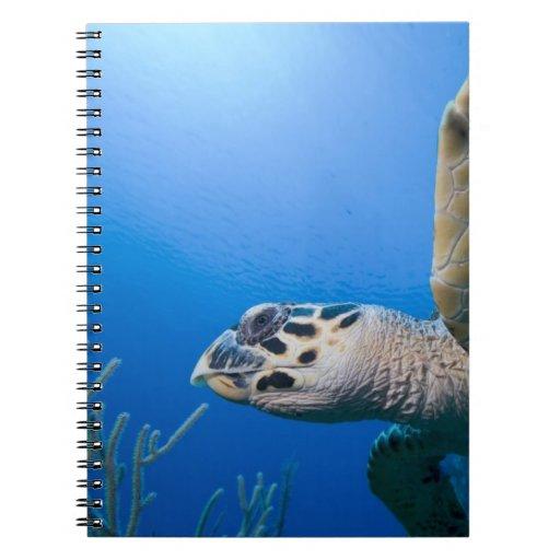 Cayman Islands, Little Cayman Island, Underwater Notebook