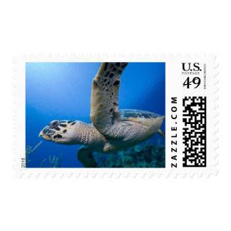 Cayman Islands, Little Cayman Island, Underwater Postage