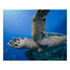 Cayman Islands, Little Cayman Island, Underwater Poster