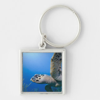 Cayman Islands, Little Cayman Island, Underwater Silver-Colored Square Keychain
