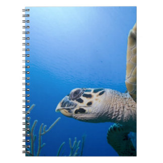 Cayman Islands, Little Cayman Island, Underwater Spiral Notebook