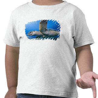 Cayman Islands, Little Cayman Island, Underwater Tshirt