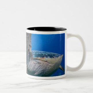 Cayman Islands, Little Cayman Island, Underwater Two-Tone Coffee Mug