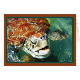 Cayman Turtle Card