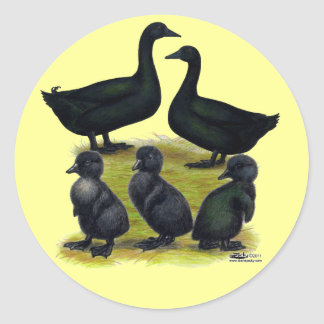 Cayuga Duck Family Classic Round Sticker