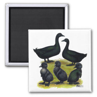 Cayuga Duck Family Magnet