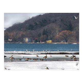 Cayuga Lake in Winter Postcard