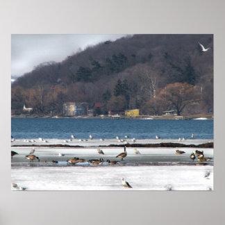 Cayuga Lake in Winter Poster