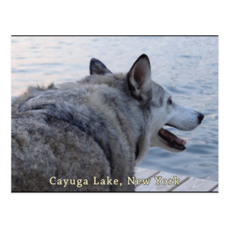 Cayuga Lake Wolf Dog Postcard