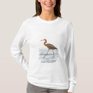 Caza adulta del Egret rojizo en la bahía, Tejas Playera