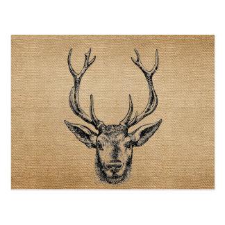 Caza de la cabeza de los ciervos del vintage de la tarjeta postal