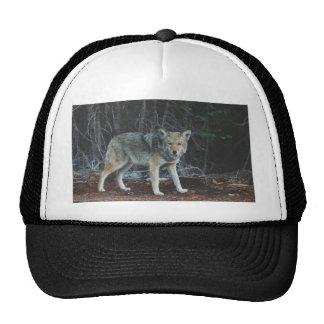 Caza del coyote gorra