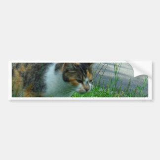 Caza del gatito de la conquista pegatina para auto