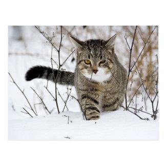 Caza del gato de Tabby en la nieve Postal