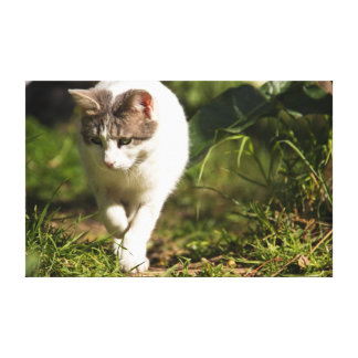 Caza del gato impresión en lona
