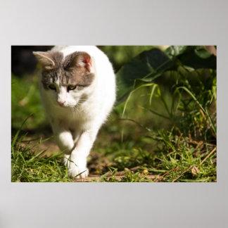 Caza del gato posters