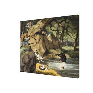 Caza del oso de Norteamérica, grabada por Matthew  Lona Envuelta Para Galerías