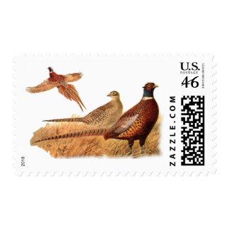 Caza evasiva del pájaro del faisán