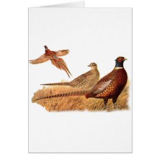 Caza evasiva del pájaro del faisán tarjeta de felicitación