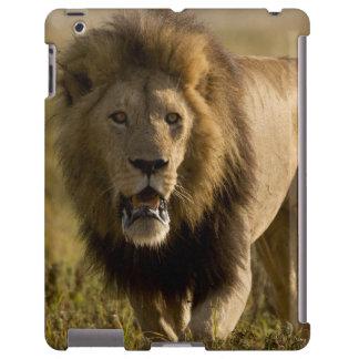 Caza masculina del león