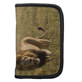 Caza masculina del león organizador