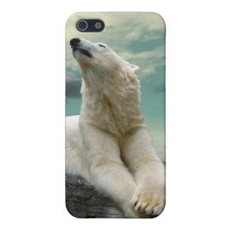 Cazador blanco del oso polar en roca iPhone 5 funda