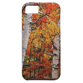 CB030344 iPhone 5 COVERS