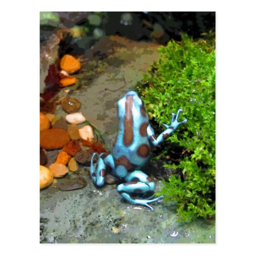 CB azules plateados de la rana del dardo Postales