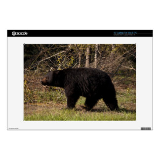 "CBB Chubby Black Bear 13"" Laptop Decals"