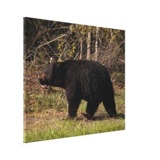 CBB Chubby Black Bear Canvas Prints