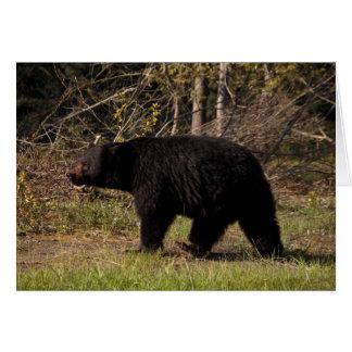 CBB Chubby Black Bear Card