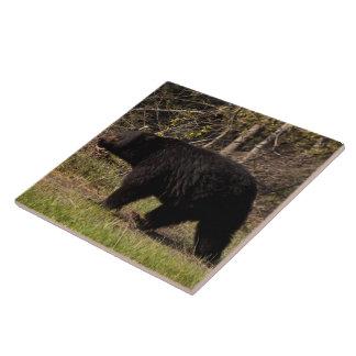 CBB Chubby Black Bear Ceramic Tile