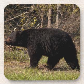 CBB Chubby Black Bear Drink Coaster