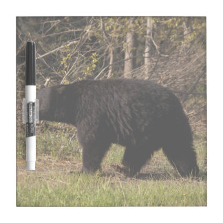 CBB Chubby Black Bear Dry Erase Whiteboard
