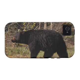 CBB Chubby Black Bear iPhone 4/4S Covers
