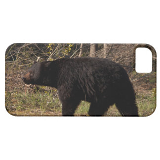 CBB Chubby Black Bear iPhone 5 Case