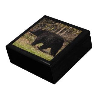 CBB Chubby Black Bear Keepsake Boxes
