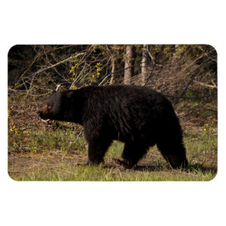 CBB Chubby Black Bear Magnet