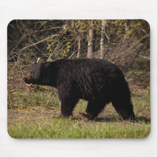 CBB Chubby Black Bear Mousepad