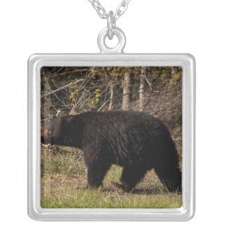 CBB Chubby Black Bear Necklaces