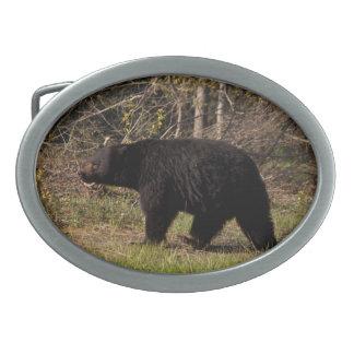 CBB Chubby Black Bear Oval Belt Buckle