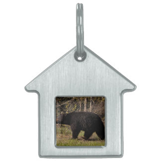 CBB Chubby Black Bear Pet ID Tags