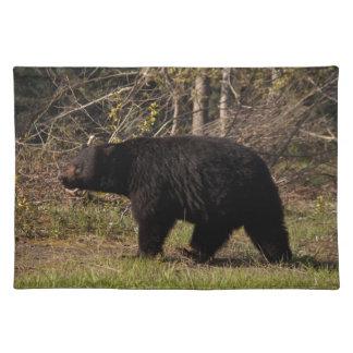 CBB Chubby Black Bear Placemats